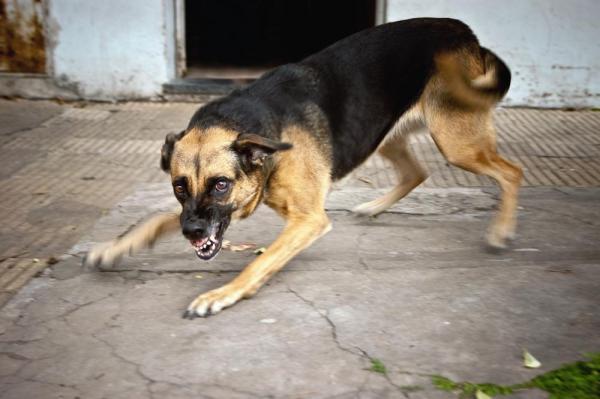 У собаки от заражения меняется поведение