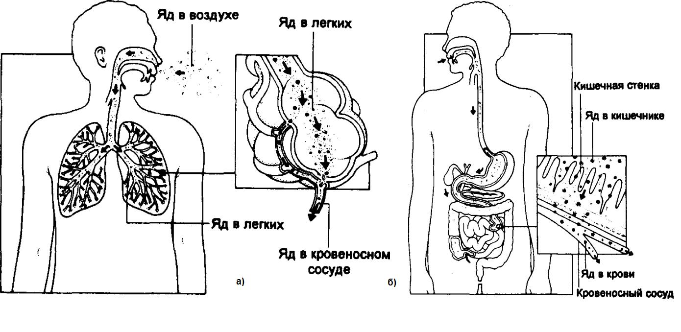 Пути попадания яда в организм человека